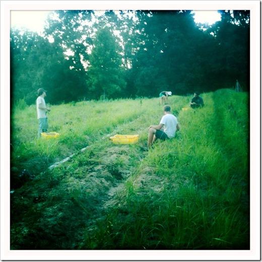 1 July - harvest camaraderie