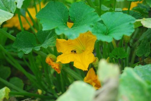Happy pollinator